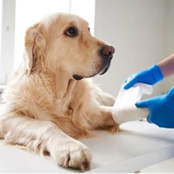 Comprar o produto de Cirurgias e Anestesias Veterinárias - PrimeVet Clínica e Estética Animal em Clínicas Veterinárias em Botucatu, SP por Solutudo