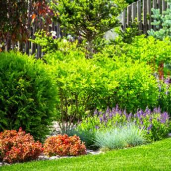 Comprar produto Restauração de Jardins em Limpeza de Jardins pela empresa R.R. Jardinagem em Bauru, SP
