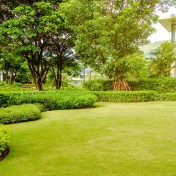 Comprar produto Formação de Jardins    em Limpeza de Jardins pela empresa R.R. Jardinagem em Bauru, SP
