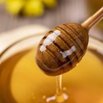 Comprar o produto de Mel de abelhas sem ferrão em Apiários - Mel e Derivados em Jundiaí, SP por Solutudo