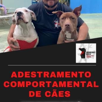 Comprar o produto de Adestramento Comportamental de Cães em Adestramento em Botucatu, SP por Solutudo