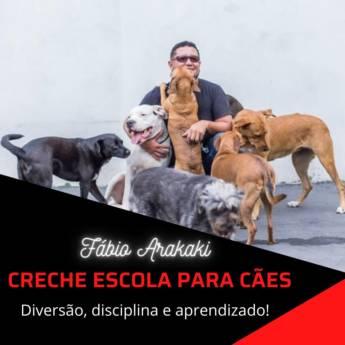Comprar o produto de Creche Escola para Cães em Adestramento em Botucatu, SP por Solutudo