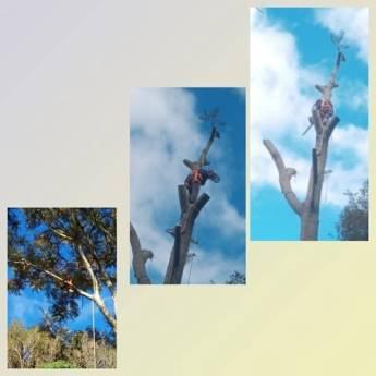 Comprar produto Podas de Árvores em Paisagismo pela empresa Agro Jardim em Botucatu, SP