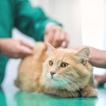 Comprar o produto de Rx e Laboratoriais em Pet Shop pela empresa Univet - Clínica Veterinária e Pet Shop em Aracaju, SE por Solutudo