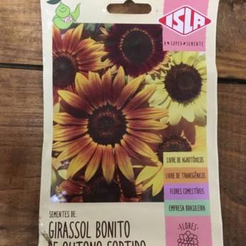 Comprar o produto de semente girassol bonito outono  em A Classificar em Botucatu, SP por Solutudo