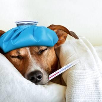 Comprar o produto de Internamento em Pet Shop em Aracaju, SE por Solutudo