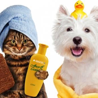 Comprar o produto de banho e tosa em Pet Shop em Aracaju, SE por Solutudo