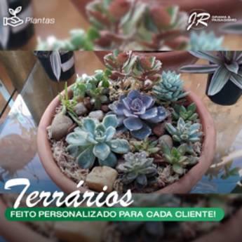 Comprar produto Terrário em Plantas pela empresa JR Gramas & Paisagismo em Americana, SP