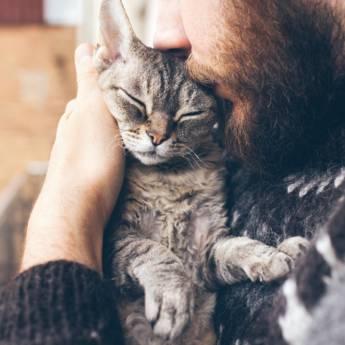 Comprar o produto de Feirinha de Doação de Gatinhos em Animais em Atibaia, SP por Solutudo