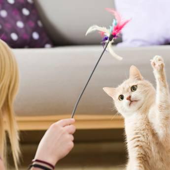 Comprar o produto de Acessórios para felinos em Outros Serviços em Atibaia, SP por Solutudo
