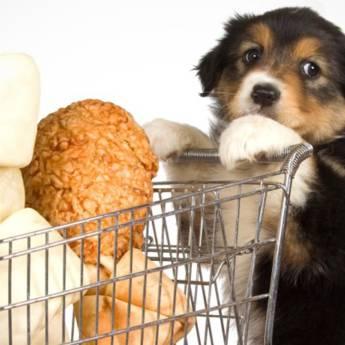 Comprar o produto de Pet Shop em Pet Shop em Aracaju, SE por Solutudo