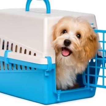 Comprar o produto de Transporte e Aluguel de Gaiola para viagem em Animais em Tietê, SP por Solutudo