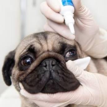 Comprar o produto de Cirurgia Oftalmológica para cães  em Veterinário em Jundiaí, SP por Solutudo