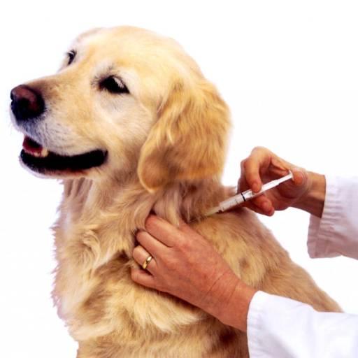 Vacinas em Atibaia, SP por Hospital Veterinário 24 Horas