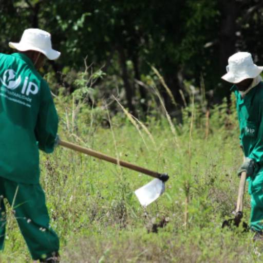 Manutenção de Áreas Verdes em Aracaju, SE por Iandê Sustentabilidade