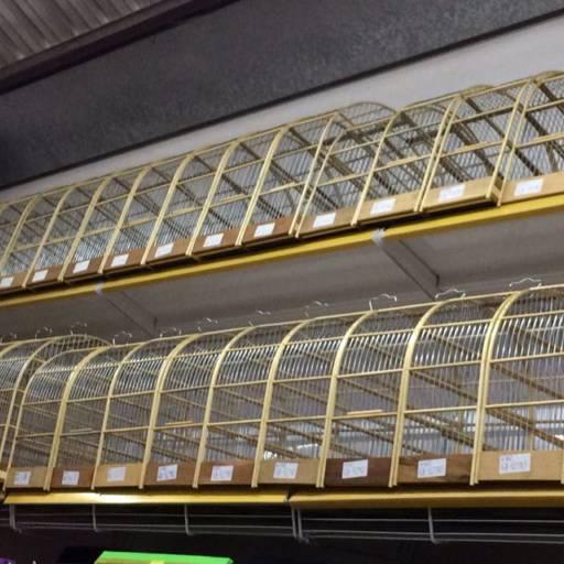 Comprar o produto de Gaiolas de madeira para passaros em A Classificar pela empresa Rancho Pantaneiro Casa Agropecuária em Botucatu, SP por Solutudo