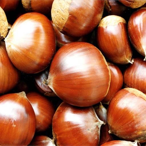 Comprar o produto de Frutas Secas & Castanhas em Alimentos e Bebidas pela empresa Zé do Queijo em Botucatu, SP por Solutudo