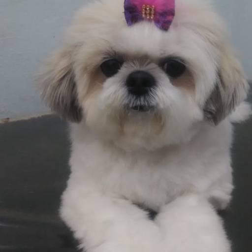 Comprar o produto de Pet Shop  em Pet Shop pela empresa Clínica Veterinária Planeta Animal em Marília, SP por Solutudo