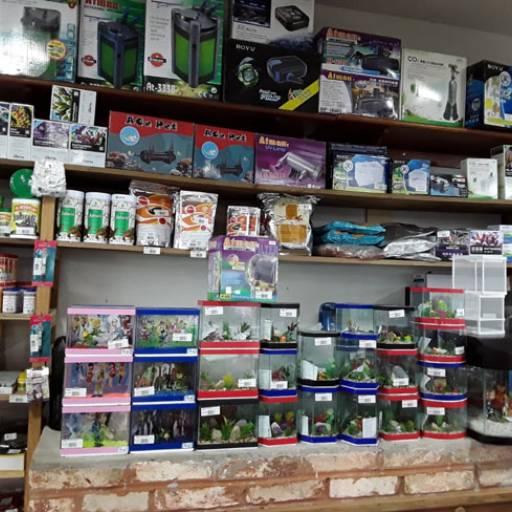 Comprar o produto de Acessórios para aquários  em Acessórios para Aquários pela empresa Flor da Terra em Birigui, SP por Solutudo