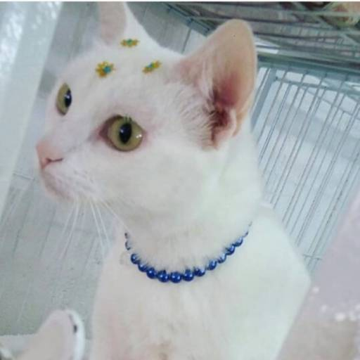 Banho e tosa para gatos por 100% Patas