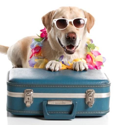 Hotelzinho por Univet - Clínica Veterinária e Pet Shop