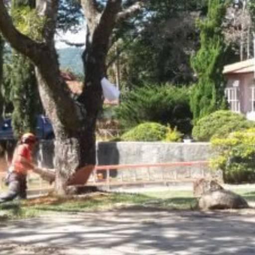 Corte de Árvore por Big Entulho