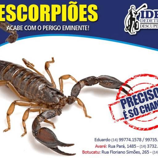 Dedetização de Escorpiões por Ideal Dedetizadora