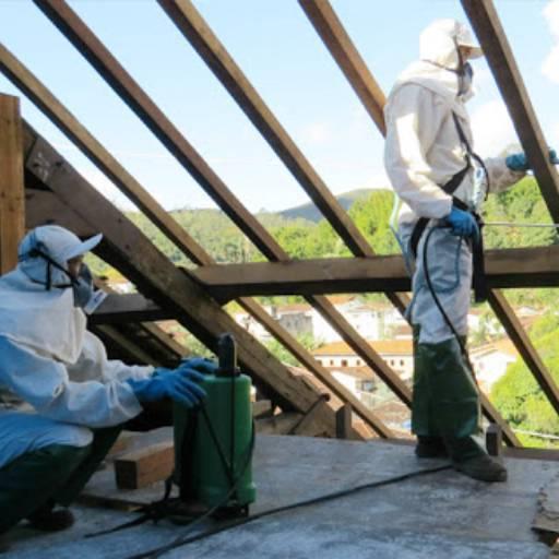 Descupinização em Tietê, SP por Dedetizadora Bioprag