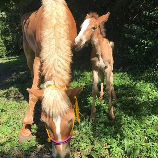 Reprodução Equina  por Horsinho Centro Equestre