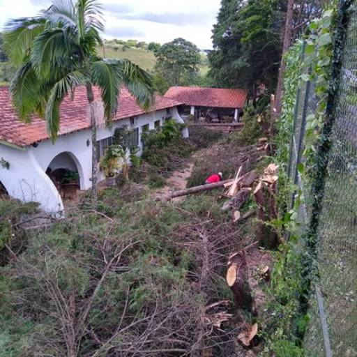 Corte de árvore e limpeza de terreno por 3 Verde Jardinagem