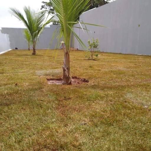 Plantio de grama e plantas por 3 Verde Jardinagem