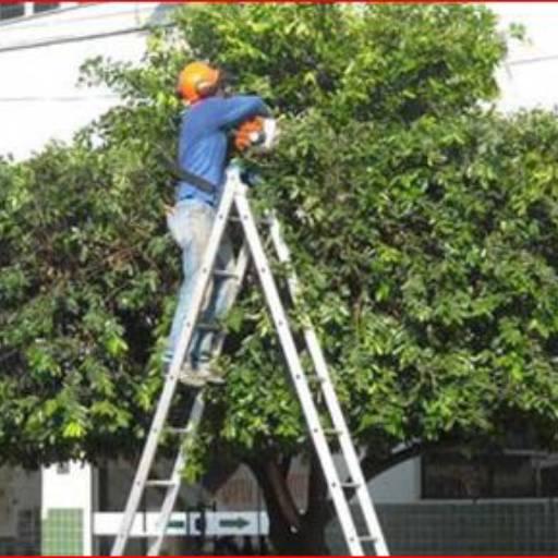 Poda de Árvores  por Pereira Limpeza de Terrenos em Geral