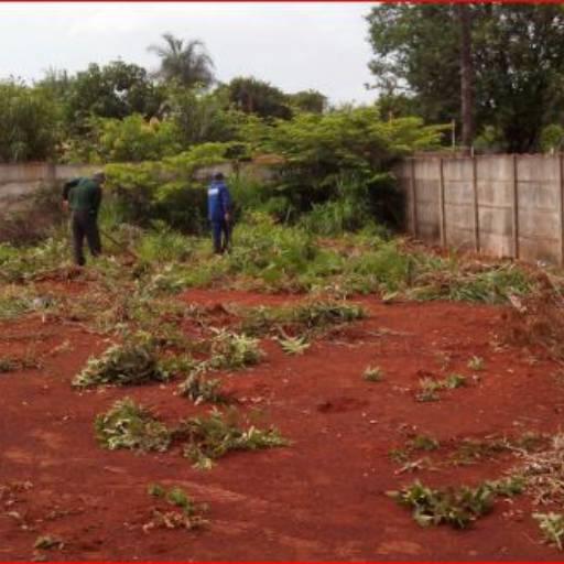Limpeza de Terreno por Pereira Limpeza de Terrenos em Geral