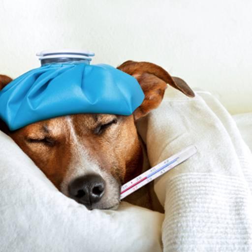 Internamento por Univet - Clínica Veterinária e Pet Shop