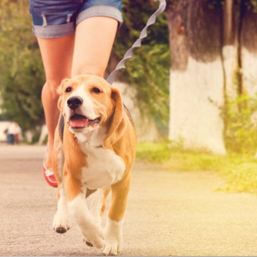 Não faz as necessidades fisiológicas no lugar certo por Meu Cão  Travesso  Adestrador