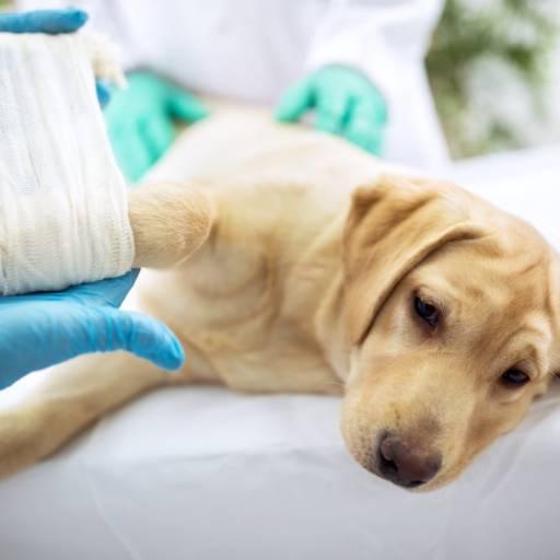 Comprar o produto de Cirurgia em Animais pela empresa Bichos & Rabichos em Atibaia, SP por Solutudo