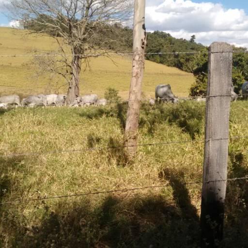 Fazenda em Monte Sião - 58 por Furquim Imóveis - CRECI 149111