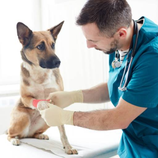 Comprar o produto de Cuidados de Emergência em Animais pela empresa Bichos & Rabichos em Atibaia, SP por Solutudo
