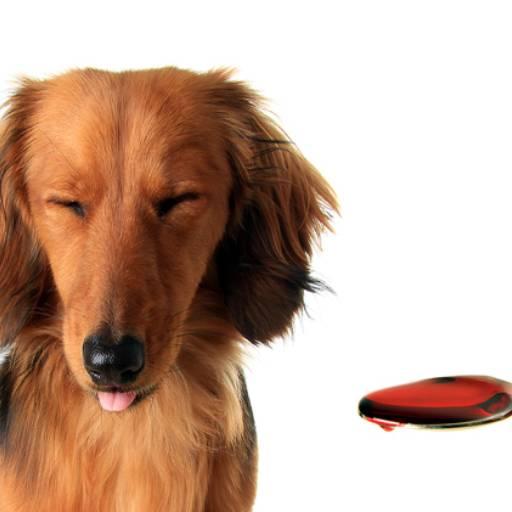 Medicamentos por Univet - Clínica Veterinária e Pet Shop